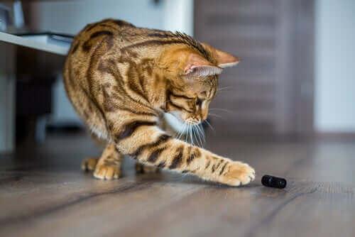 Hvorfor elsker katter å dytte ting ned på gulvet?