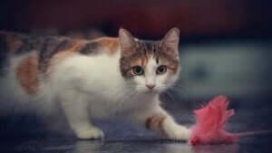En katt ser et leketøy