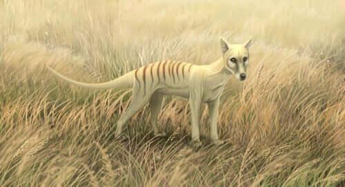 En fiktiv Tasmansk tiger
