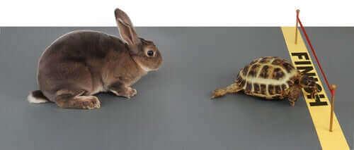 En skilpadde som krysser målstreken foran en hare i dyrehistorier for barn