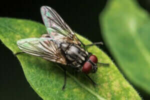 En flue som sitter på et blad