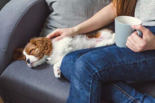 Årsaker til at et kjæledyr kan bli bevisstløst
