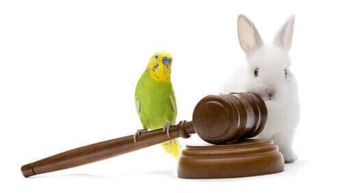En undulat og en kanin på en dommers hammer