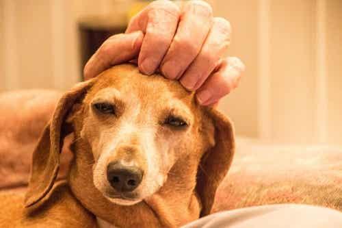 Animal Welfare Awards: Et bra businessinitiativ