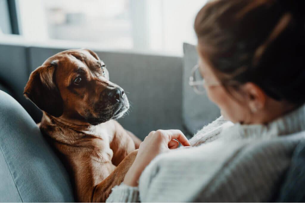 Sykdommer som gir pustevansker hos hunder
