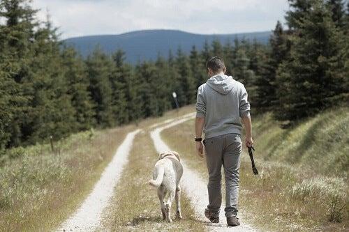 Hvorfor hunder følger etter eierne sine