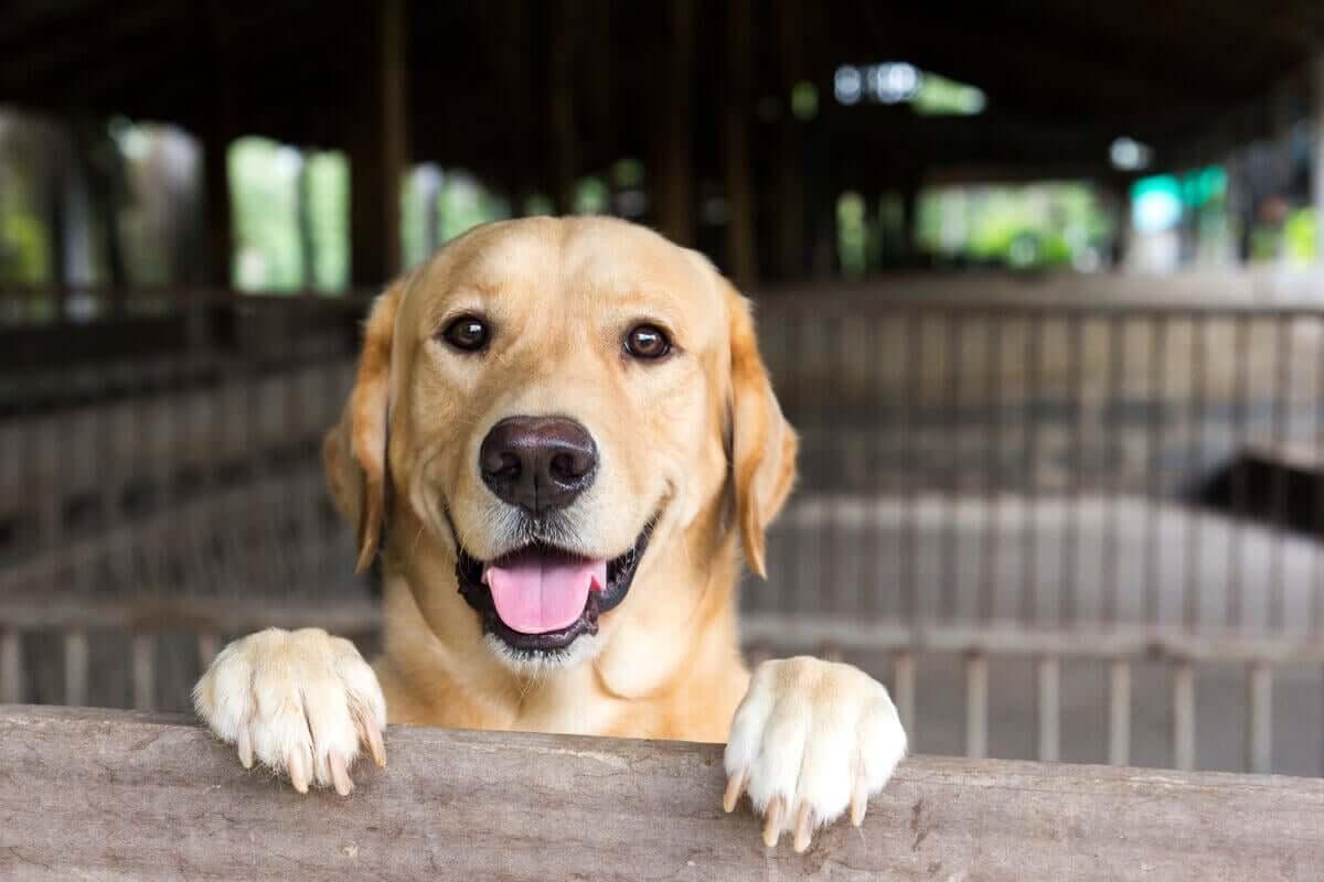 Hunden er glad for å komme hjem
