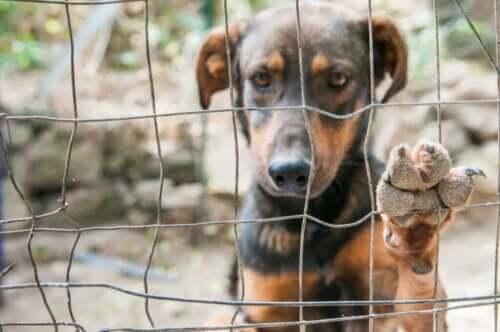 Hunder forbudt som kjæledyr av Kim Jong Un i Nord-Korea