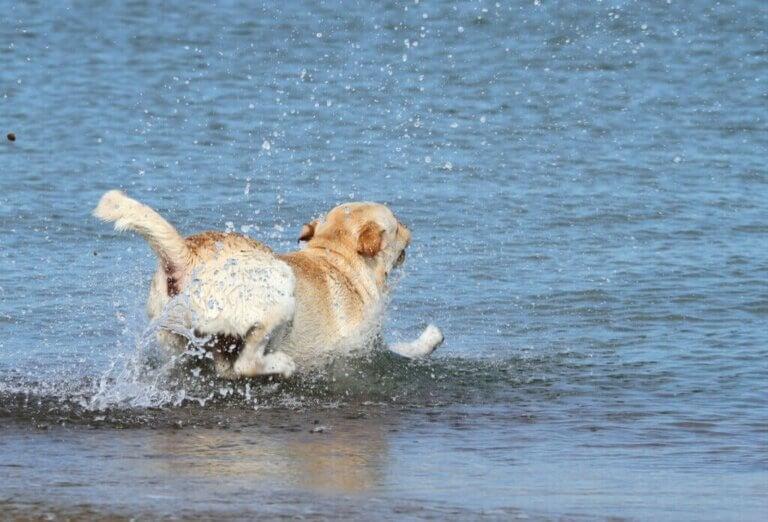 Redningsteam redder hund dratt til havs