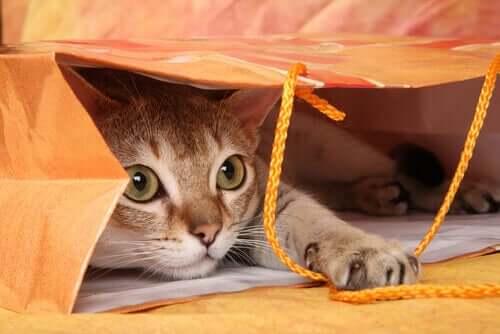 En katt som gjemmer seg i en papirpose
