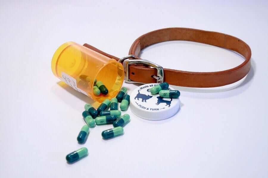 Reseptbelagte medisiner for hunder