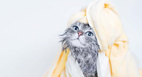 En katt etter badetid