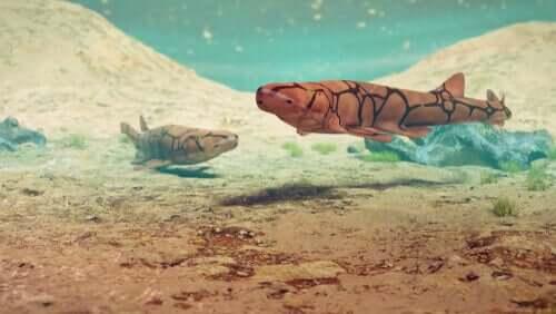 To haier på havbunnen