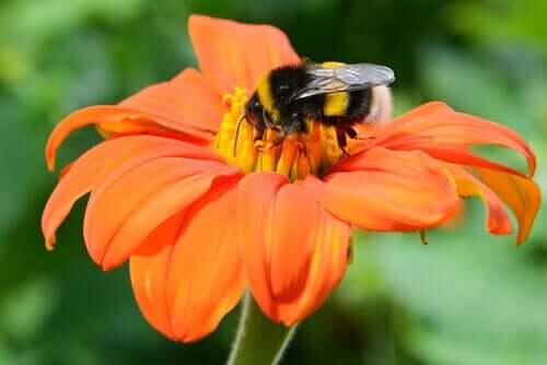 Dyr-plante-pollinering er en forfaderlig symbiose