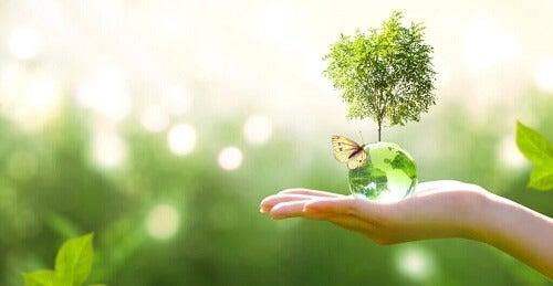 Vet du hva økologisk suksesjon er?