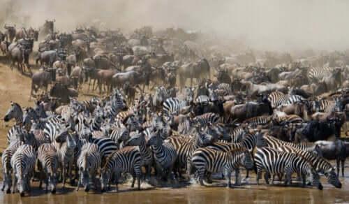 Alt om migrerende dyr