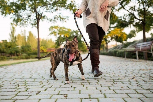 Daglige turer med hunden