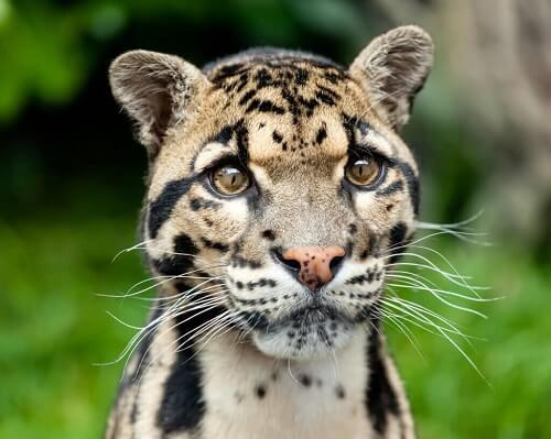Oppdag de mindre kjente aristokratene i dyreriket
