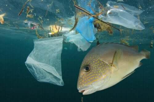 Hvordan vannforurensning påvirker fisk