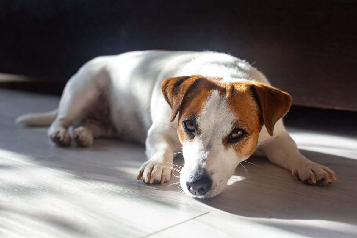En hund som slapper av i solen