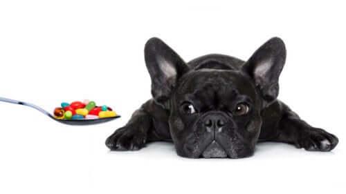 De essensielle vitaminene hunden din trenger