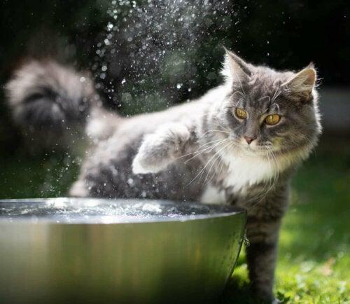 En katt og en bolle med vann