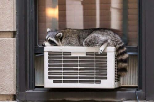 Temperaturregulering hos dyr