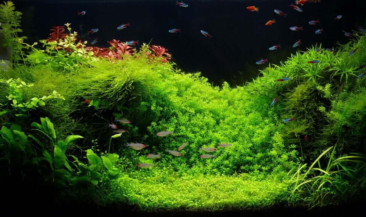 Et beplantet akvarium