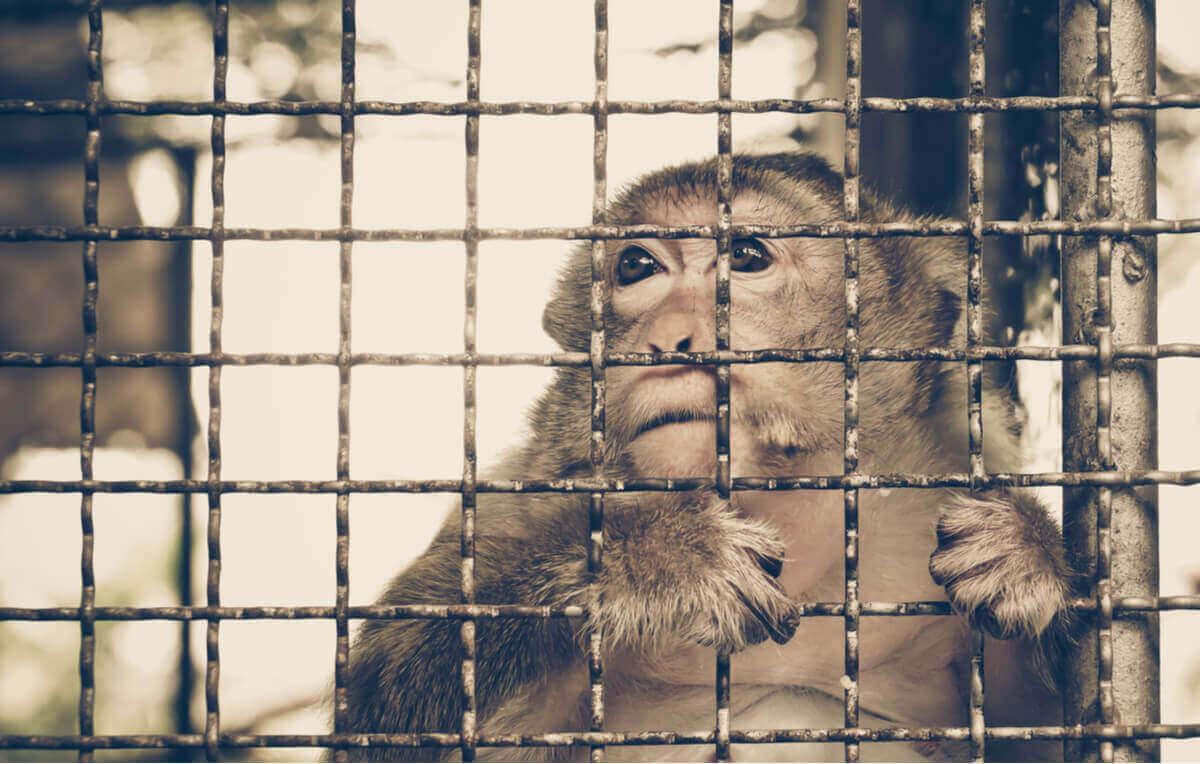 Ulovlig handel med dyr