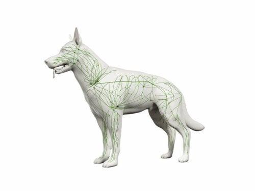 En illustrasjon av en hund