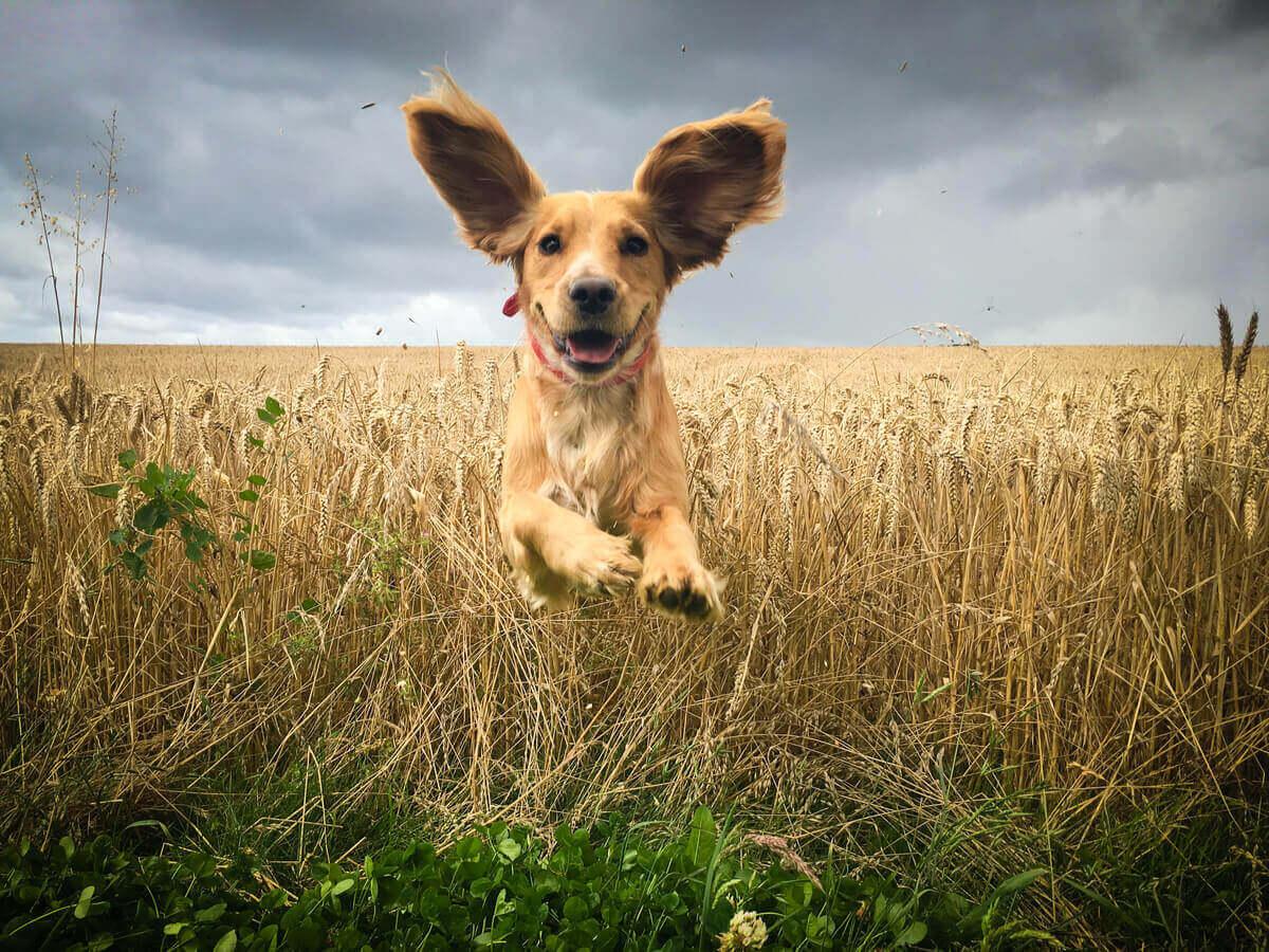 En hund som hopper rundt