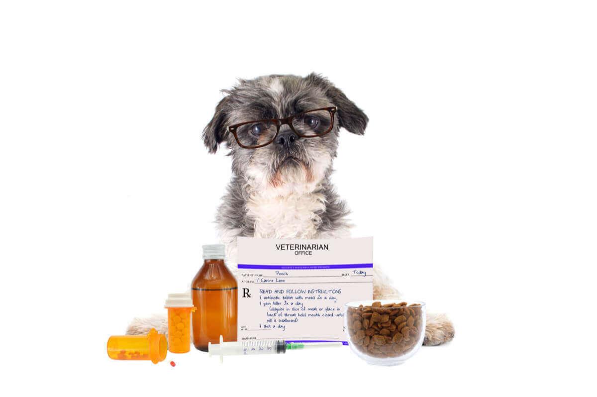 En hund som tar medisiner