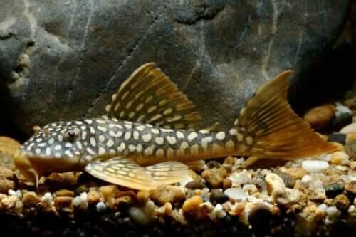 Naturlige akvariumrensere - Hold akvariet ditt rent