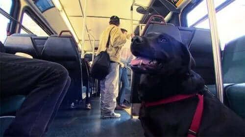 Denne hunden drar til parken på egenhånd hver dag