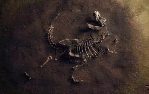 Hva er paleoøkologi?