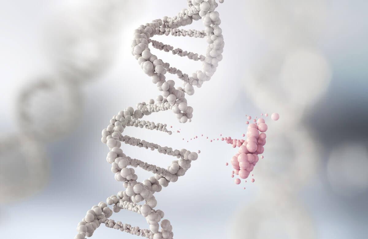 DNA og evolusjonsteoriene i et bilde
