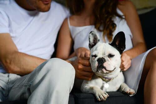 En hund som deler tid med eierne