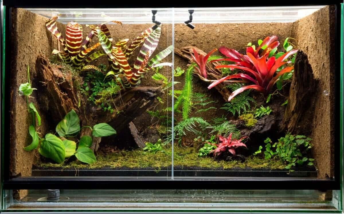 Et terrarium fullt av eksotiske planter.