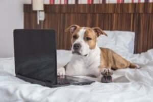 En hund foran en laptop