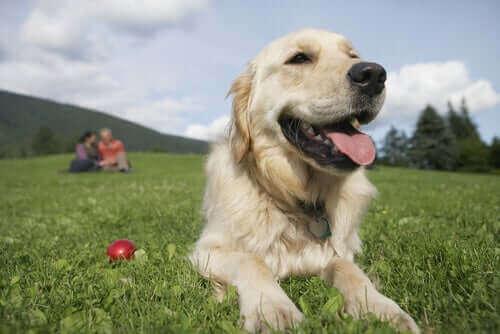 Menn eller kvinner: Hvem kommer bedre overens med hunder?