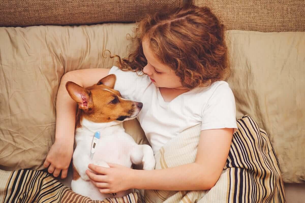 En ung jente som tar hundens temperatur med et digitalt termometer