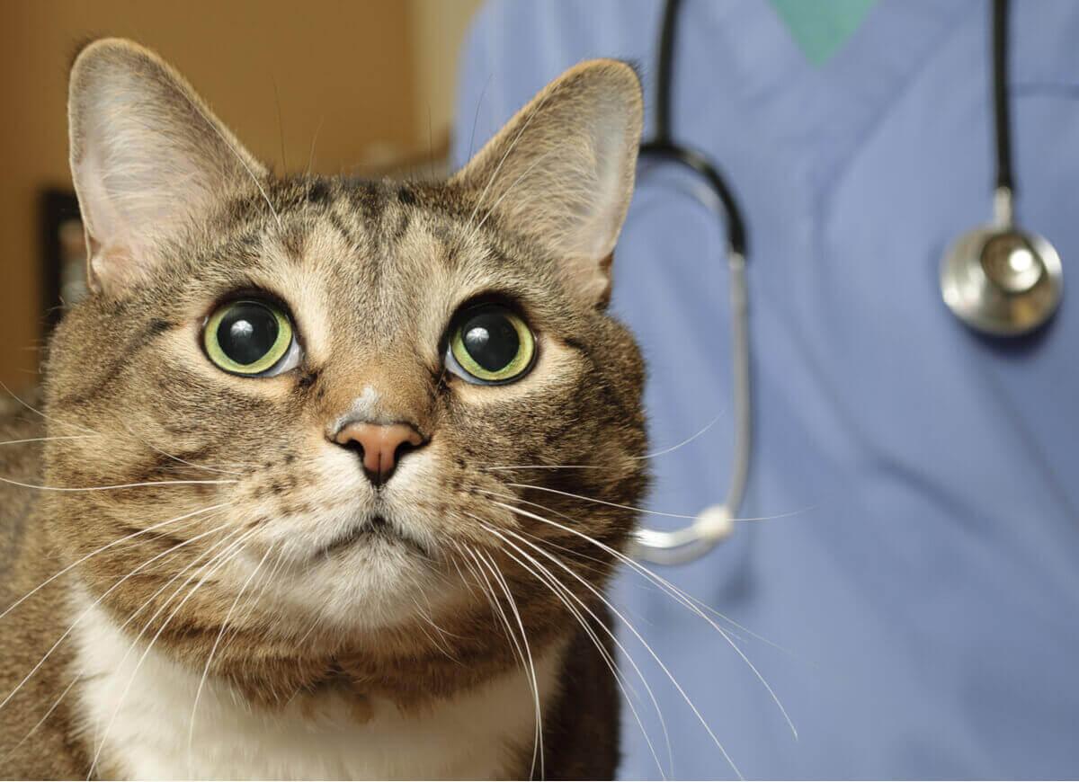 En katt i en veterinærklinikk