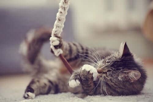 7 måter å vise katten din kjærlighet på