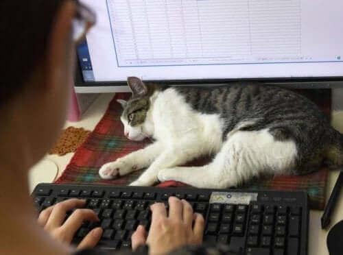 Katter på arbeidsplassen: I Japan blir katter satt i arbeid