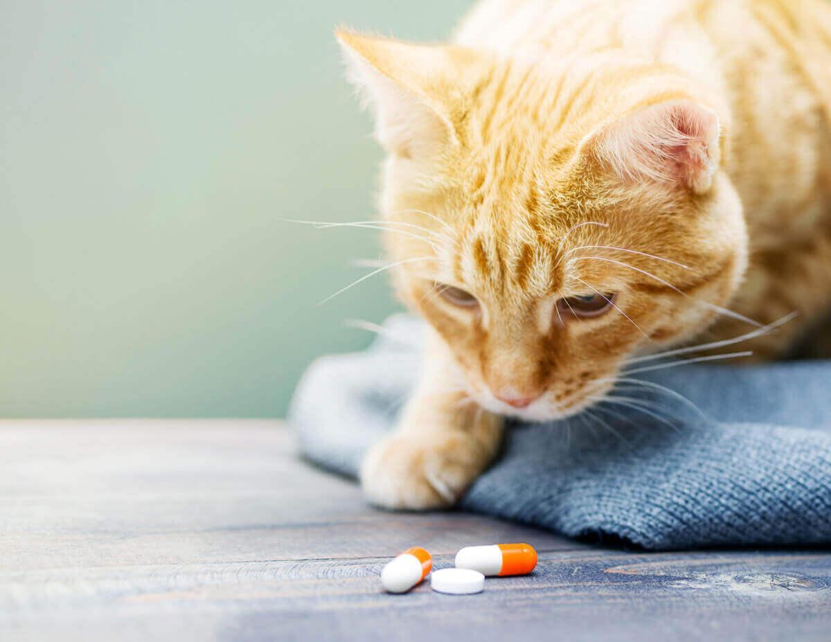 En katt som ser nøye på tre piller