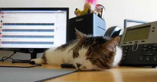 En katt som sover på et skrivebord
