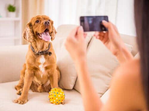 En hund som blir tatt bilde av