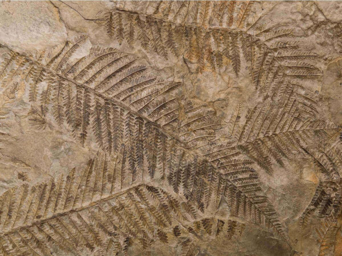 bladavtrykk på en stein