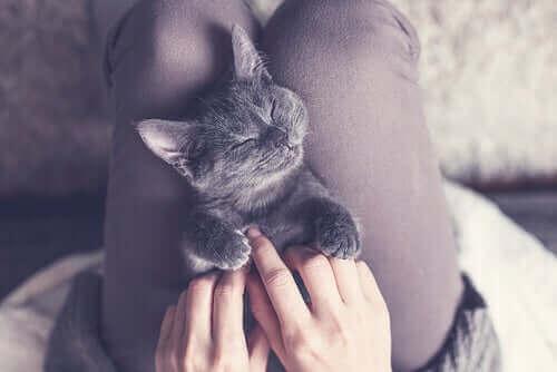 En katt som sover på fanget til en kvinne