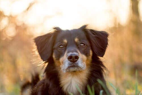 En hund ute ved solnedgang